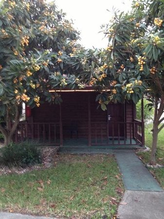 Travelodge Suites St Augustine: Queen Cottage with porch and beautiful fruit trees