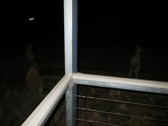 Halls Gap Lakeside Tourist Park: Kangaroo's outside of the bathroom