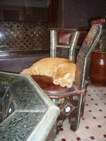 Riad La Porte Rouge: Max the cat