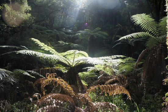 Whirinaki Rainforest Experiences - Day Tours: sunlight on the ferns