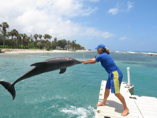 Half Moon: dolphin lagoon