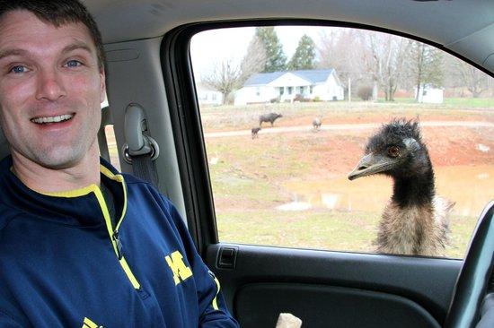 Circle G Ranch: Wild Animal Park & Camel Safari: emu were my favorite