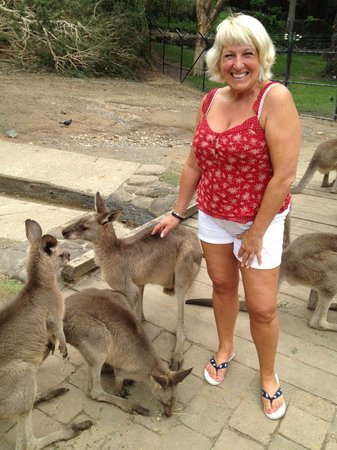 Currumbin Wildlife Sanctuary: Lovely day out