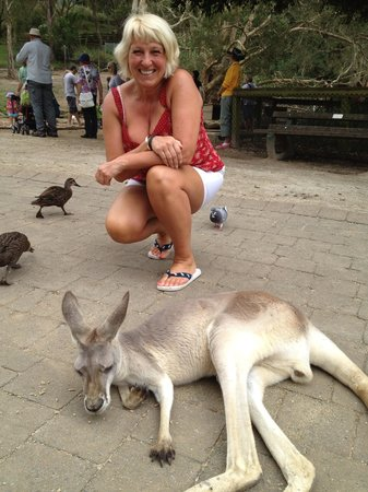 Currumbin Wildlife Sanctuary: Kangaroo's were lovely