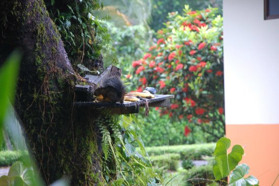 Hotel Jardines Arenal : Feeding area for birds