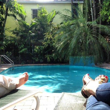 تروبيكال إن: A beautiful, serene, palm tree-covered pool area!