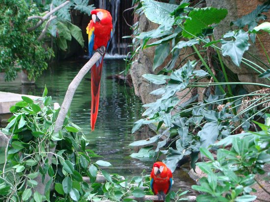 Moody Gardens: Macaw near a waterfall