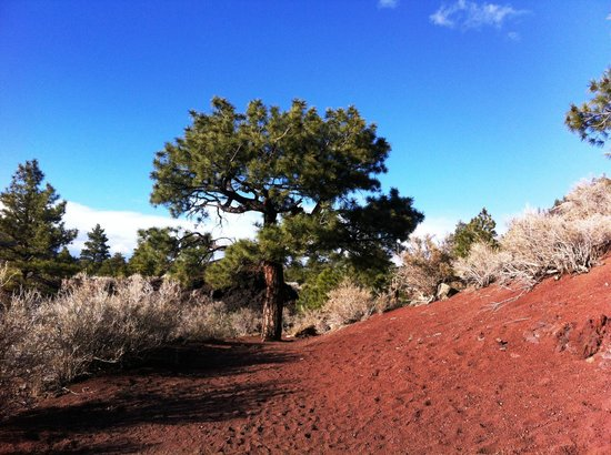 BEST WESTERN Pony Soldier Inn & Suites: Sunset Crater