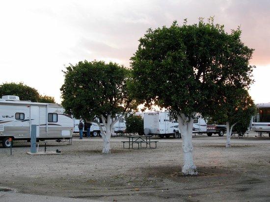 Orange Grove RV Park Bakersfield