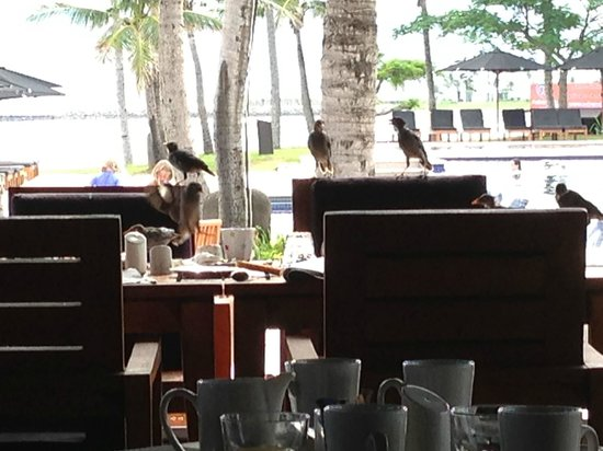 Hilton Fiji Beach Resort & Spa: Zoom in to see the birds on the table