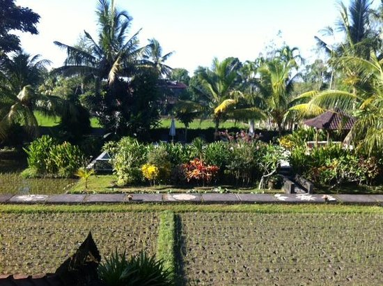 Gerebig Bungalows: View of pool and rice paddy from balcony of room