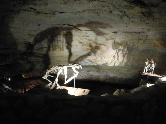 Naracoorte, Australia: awesome fossils within the Victoria Fossil Cave