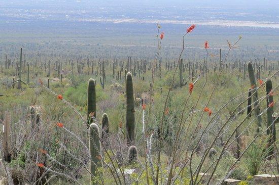 图森亚利桑那-索诺拉沙漠博物馆的照片