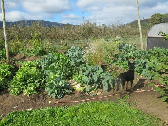 Huon Valley Caravan Park: An amazing vegetable patch