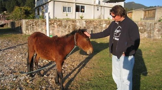 J.M. Butterfly B&B: Joel's pony