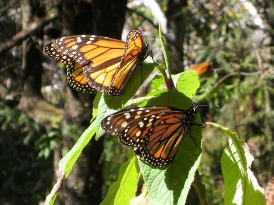 J.M. Butterfly B&B: Beautiful butterflies