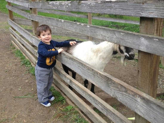 Tilden Park Little Farm: Friendly animals