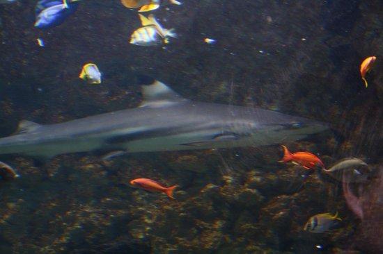 Bergen Aquarium: acquario bergen