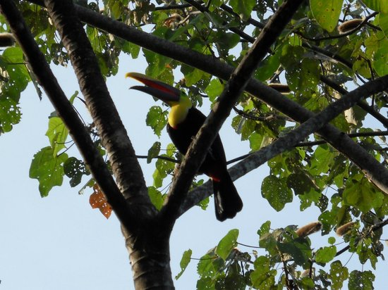 Rancho DiAndrew: nieuwschierige toucan
