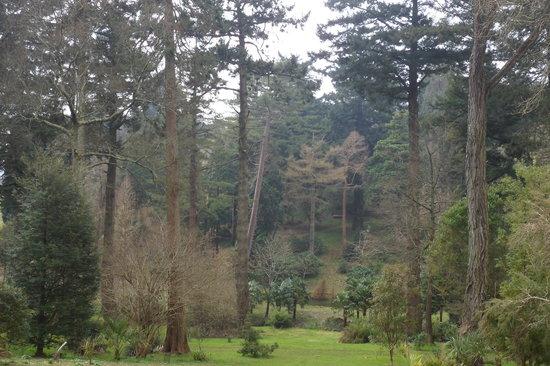 Tregrehan Garden : View over the valley