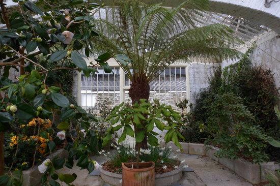 Tregrehan Garden : Inside Greenhouse