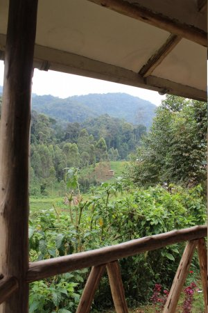 Gorilla Safari Lodge: view at the rain forest from our room
