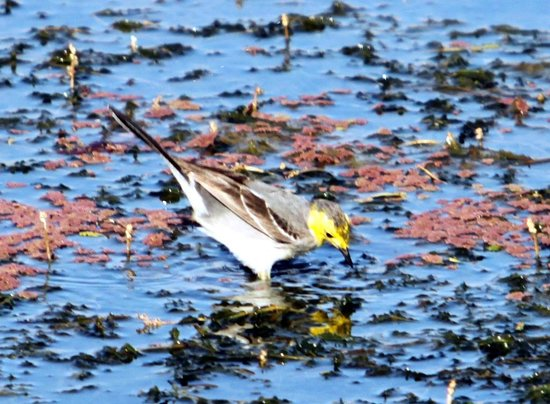 Dibru Saikhowa National Park: Seasonal wetland bird in Maguri Bill