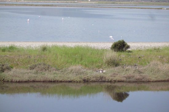 Kalloni Salt Pans: Lovely, pink flamingos!