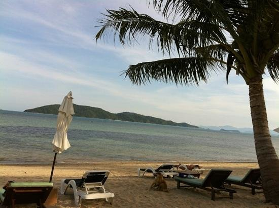 Centra by Centara Coconut Beach Resort Samui: the beach