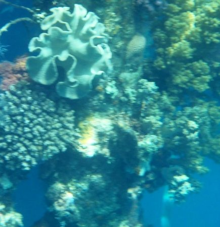 snorkelling from hotel
