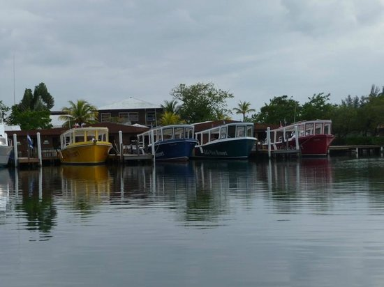 CoCo View Resort: The many dive boats at CoCo View