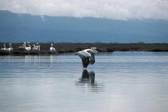 Rodia Wetlands