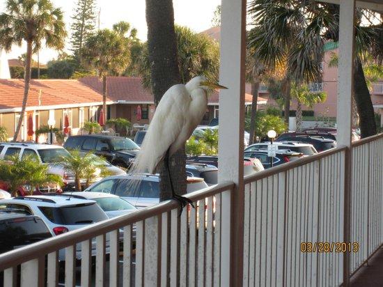 Gulf Beach Resort Motel: GBRM8