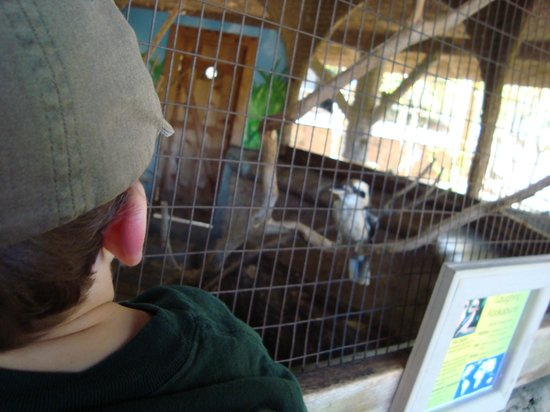Jackson, MS: He got really close to us.  He would land on the cage, right in front of our face!