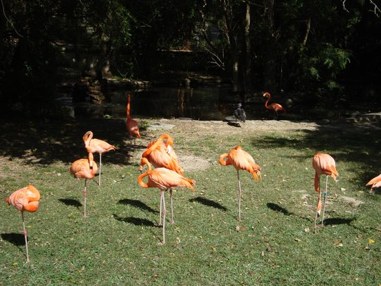 Jackson, MS: The flamigos are always fun to watch!  The flamingo exhibit is very nice.
