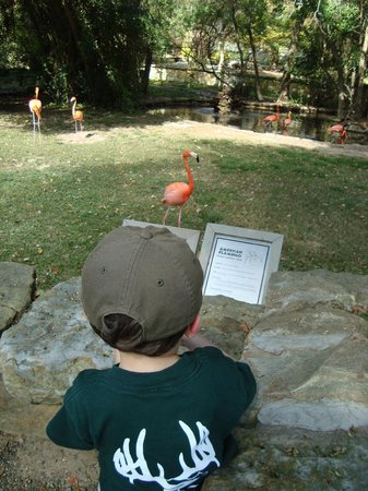 Jackson, MS: A little information about the flamingo...let me display myself (says the flamingo...)