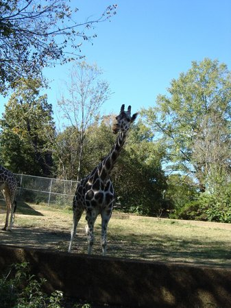 Jackson, MS: The giraffes got really close to us too!