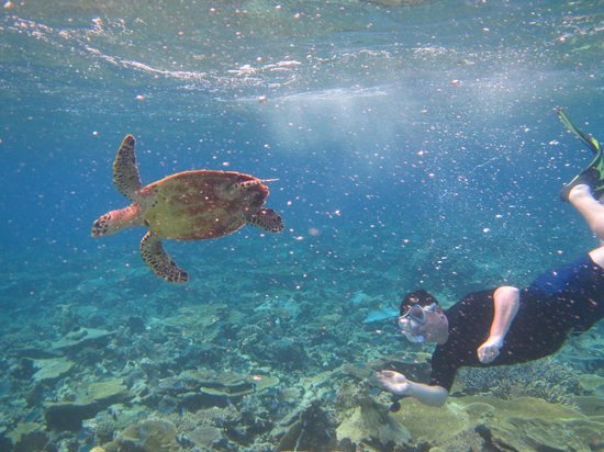 Lily Beach Resort & Spa: Swimming with a Turtle