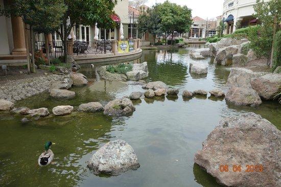 Blackhawk Plaza: Beautiful Pond behind Restaurants and Shops