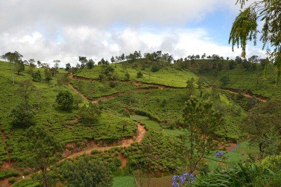 Heritance Tea Factory: Vue