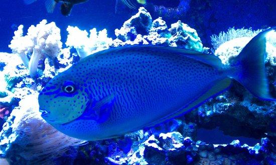 Butterfly House & Aquarium: Fish