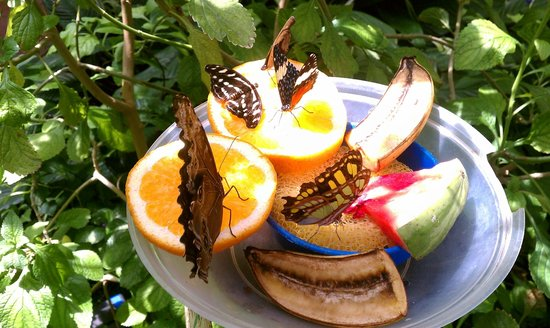 Butterfly House & Aquarium: It's time for lunch!
