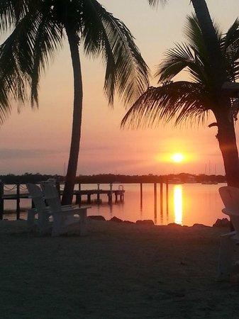 코코넛 팜 인 사진