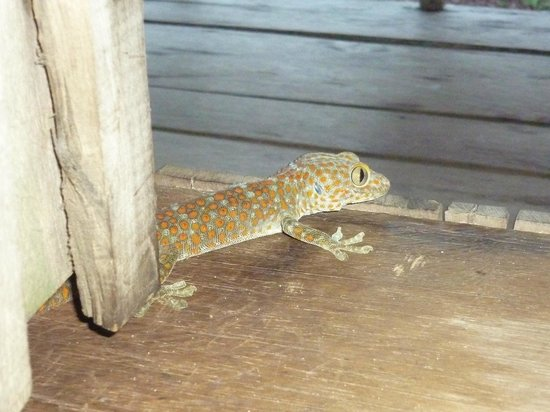 Lazy Beach: Friendly gecko