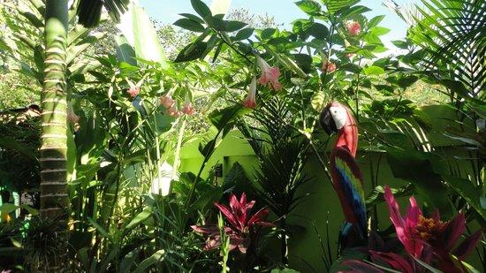 Physis Caribbean Bed & Breakfast: Garten/Aufenhaltsbereich