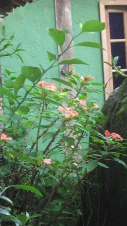 Pousada Ouro Verde: Flowers outside bedroom window