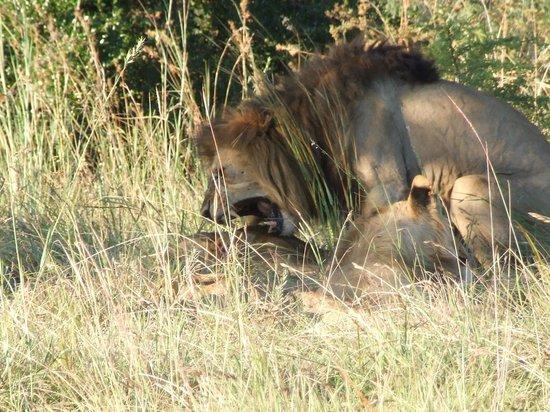 Nambiti Hills Private Game Lodge: Lion style