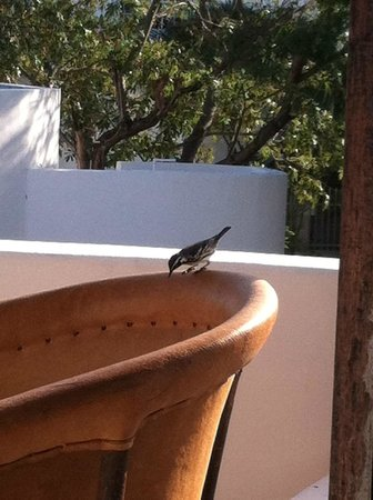 Tamarindo Bed and Breakfast: A visitor to our apartment balcony