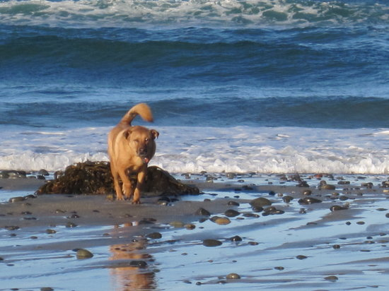 Dog Beach: Walking on the beach