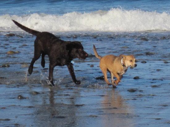 Dog Beach: Morning run on the beach